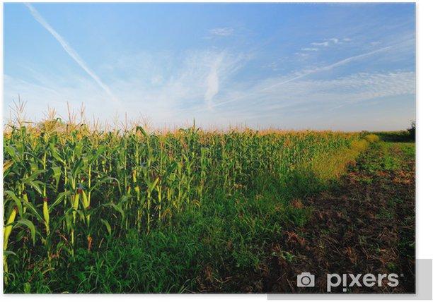 Plakat Pole kukurydzy w godzinach porannych - Pory roku