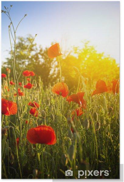 Plakat Pole kwiatów maku kukurydzy - Kwiaty