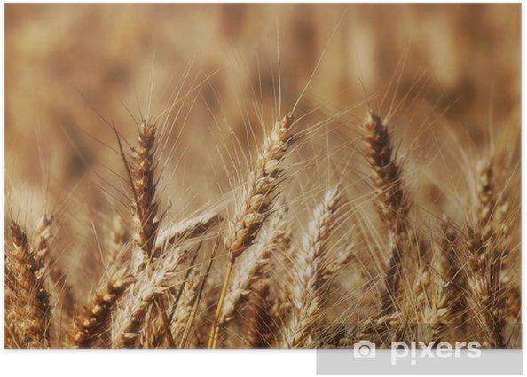 Plakat Pole pszenicy - Pory roku