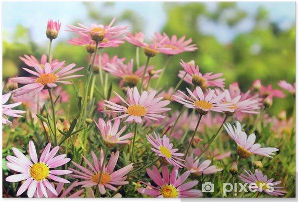 Plakat Pole różowe camomiles - Kwiaty