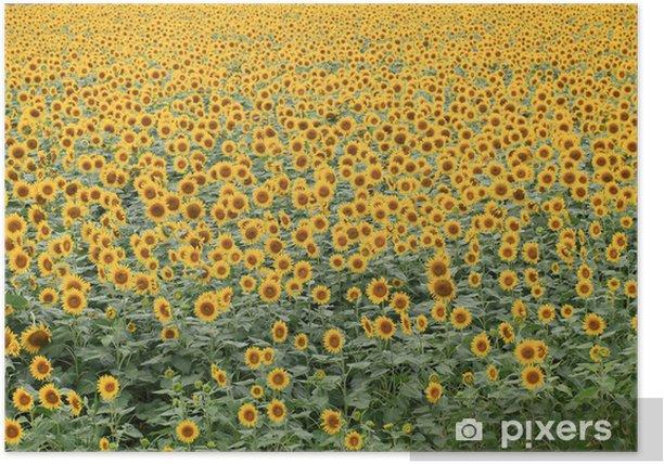 Plakat Pole słoneczników Yanagawa - Pory roku