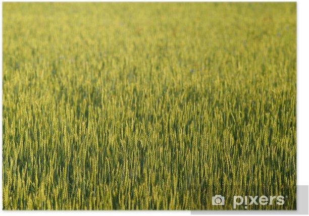 Plakát Pole žita - Rostliny