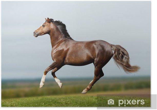 Plakát Pony v poli tryskem - Savci