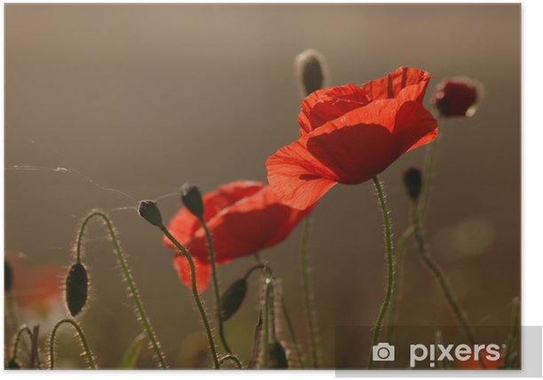 Plakat Popies - Kwiaty