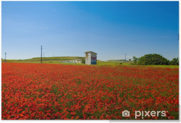 Plakat Poppy Field z domu - Kwiaty