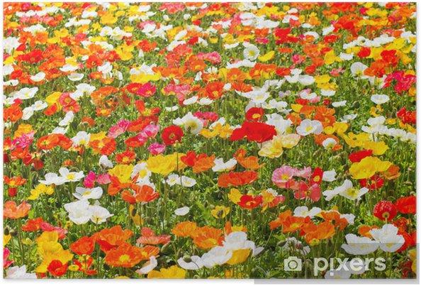 Plakat Poppy - Pory roku