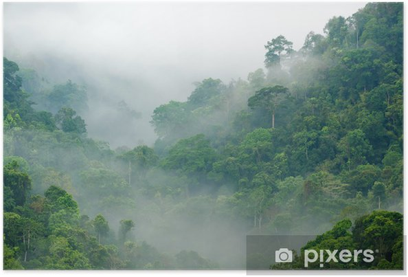 Plakat Poranna mgła w lesie tropikalnym - Tematy