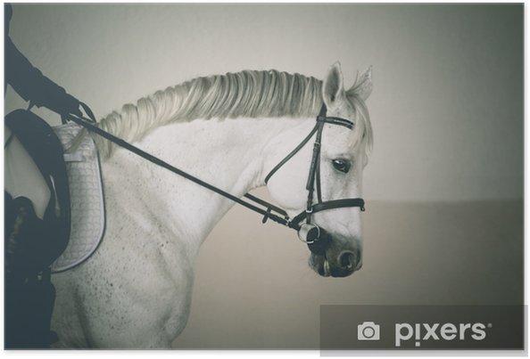 Plakat Portret białego konia w czarnej uzdę z jeźdźcem dłoni i nogi - Sport