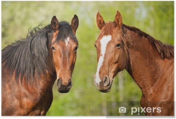 Plakat Portret dwóch koni w lecie - Tematy