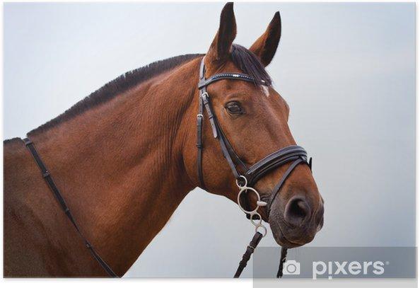 Plakat Portret Holsztyn konia na tle błękitnego nieba - Ssaki