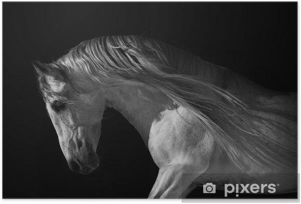 Plakat Portret konia na ciemnym tle - Tematy