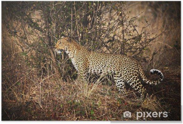 Plakat Portret leopard - Afryka