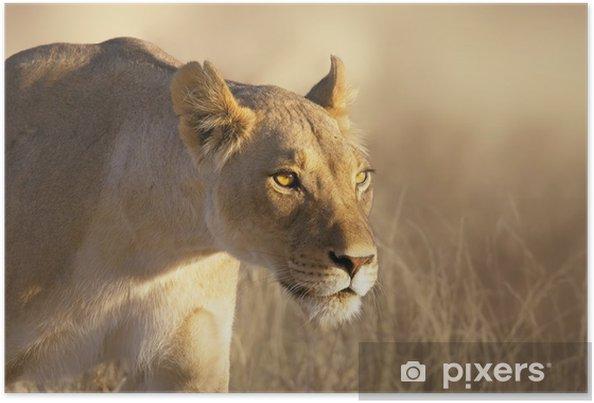 Plakat Portret lwica -