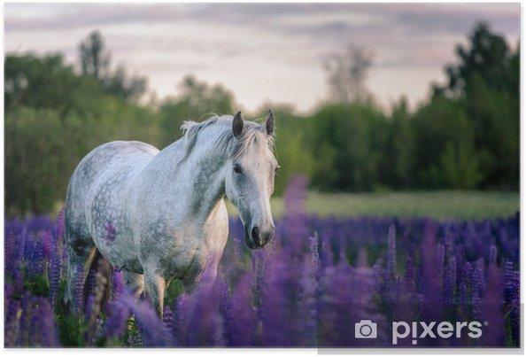 Plakát Portrét šedého koně mezi lupínky. - Zvířata