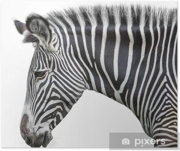 Plakat Portret zebra - Naklejki na ścianę