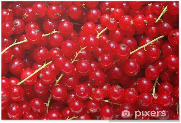 Plakat Porzeczki jagody - Posiłki