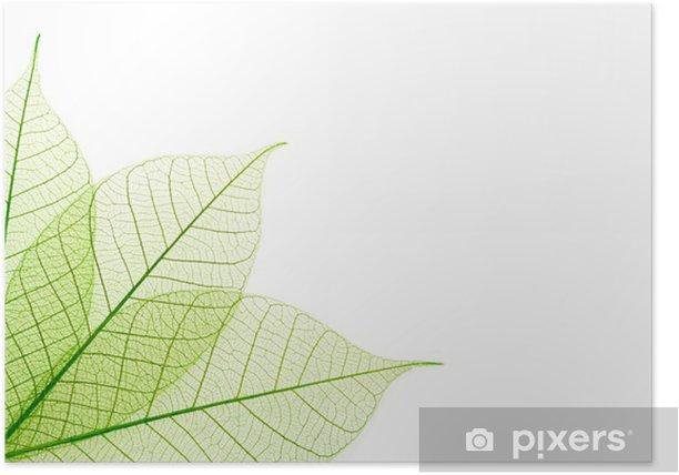 Plakat Prążkowane zielone liście - Pory roku