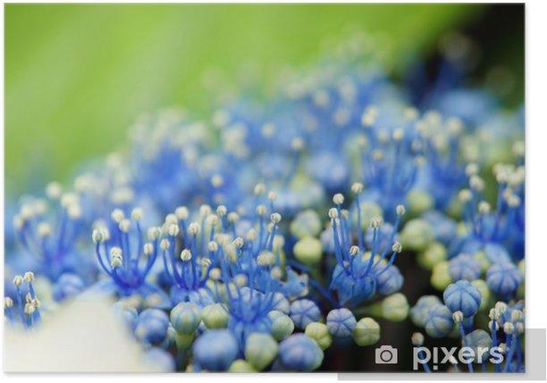 Plakat Pręcik i słupek z hortensji - Kwiaty