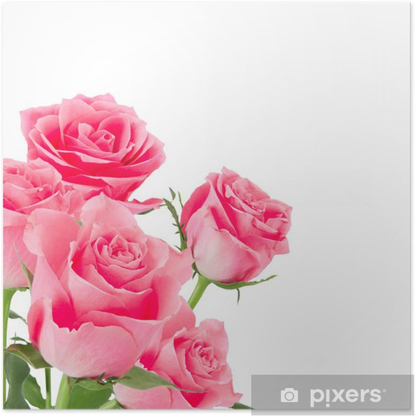 Plakát Přírodní růžové růže pozadí - Imaginární zvířata
