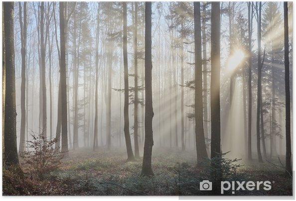 Plakat Promienie słoneczne w mglistym lesie - Tematy