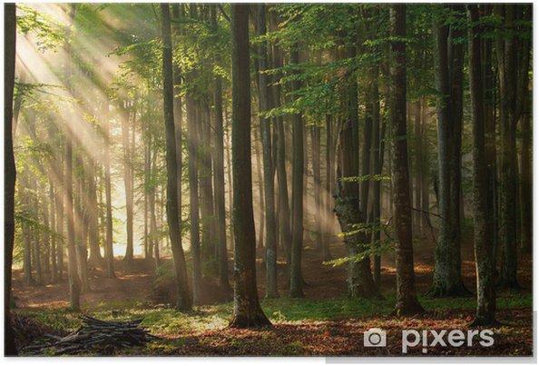 Plakat Promyki słońca przebijają się przez las - Tematy