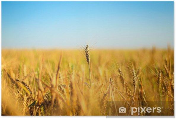 Plakát Pšeničné pole - Venkov