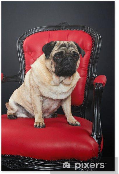 Plakat Psy Pug - Mopsy