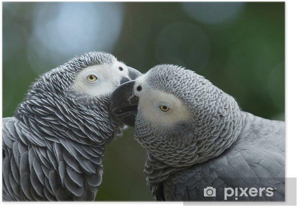 Plakat Ptak papuga - Ptaki