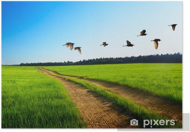 Plakat Ptaki i drogowe - Pory roku