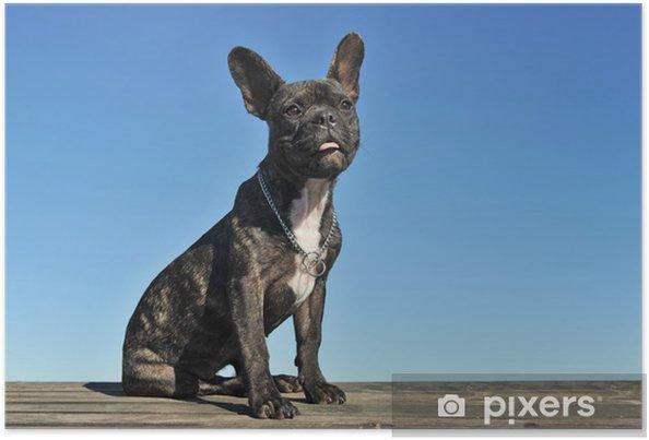 Plakat Puppy Buldog francuski - Buldogi francuskie