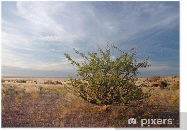 Plakat Pustynia roślin (Commiphora spp.), Namibia - Cuda natury