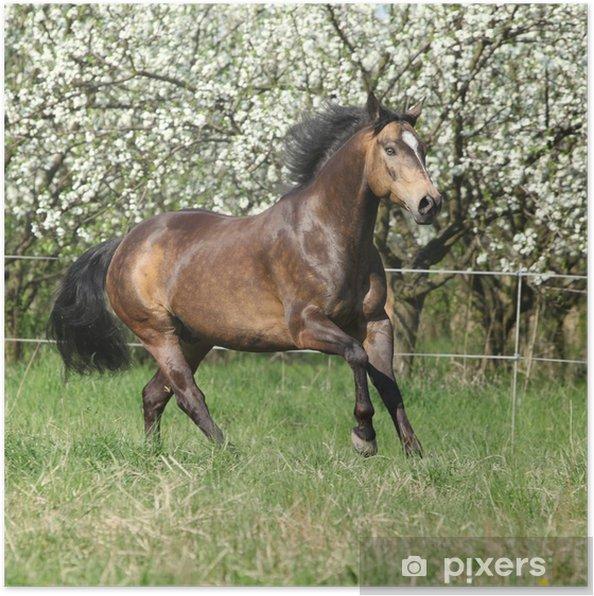 Plakat Quarter Horse uruchomiony przed kwitnących drzew - Ssaki