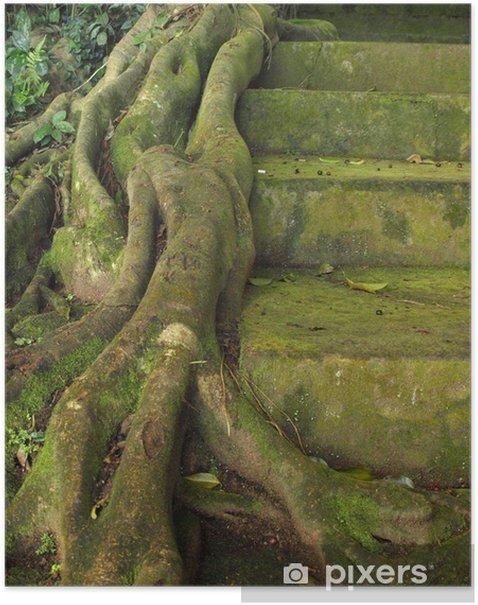 Plakat Racines drzewo contre un escalier - Cuda natury