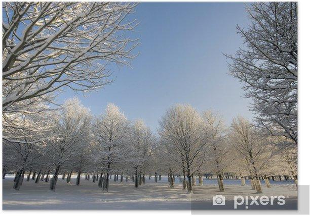 Plakát Řádky stromů v zimě - Venkov