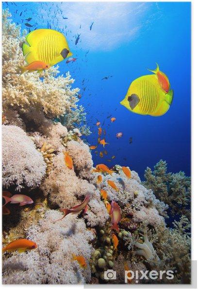 Plakat Rafa koralowa i Masked Butterfly Fish - Rafa koralowa