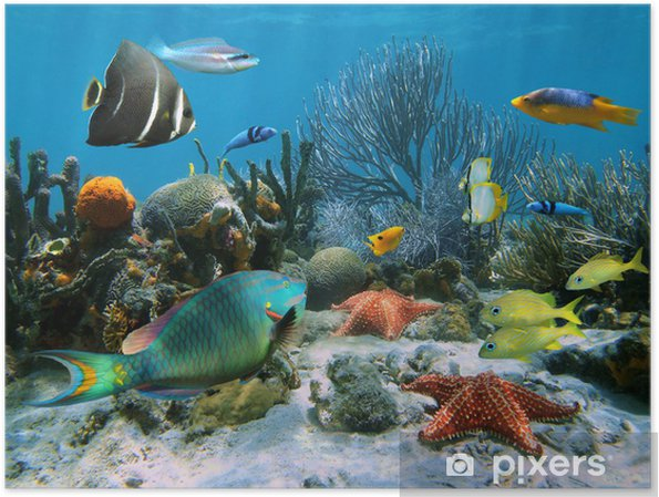 Plakat Rafa Koralowa I Rozgwiazdy