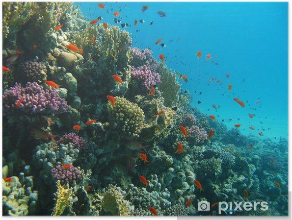 Plakat Rafa Koralowa I Ryby Tropikalne