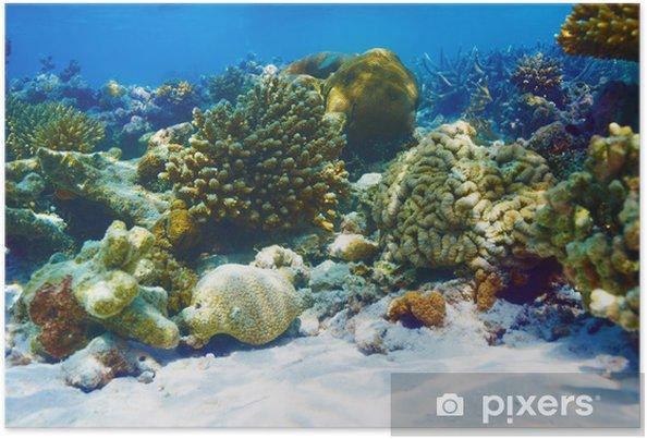 Plakat Rafa koralowa na Malediwach - Rafa koralowa
