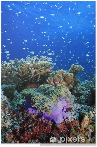 Plakat Rafa Koralowa Rafa Koralowa