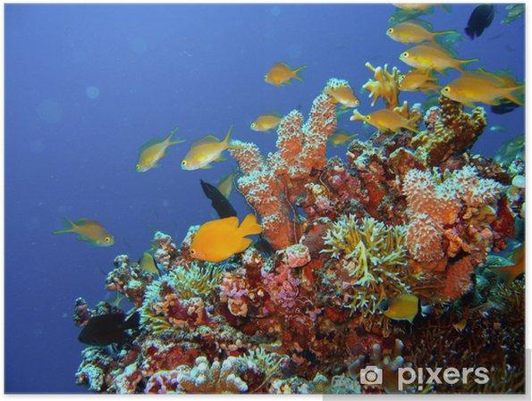 Plakat Rafa Koralowa Ryby