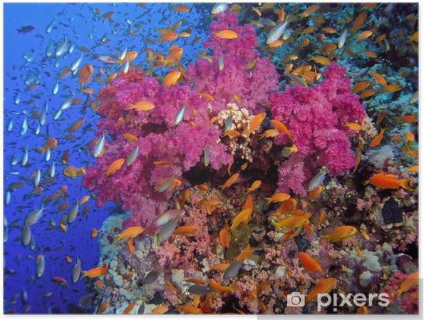 Plakat Rafa koralowa - Rafa koralowa