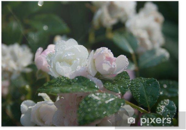 Plakat Rano kwiaty - Kwiaty
