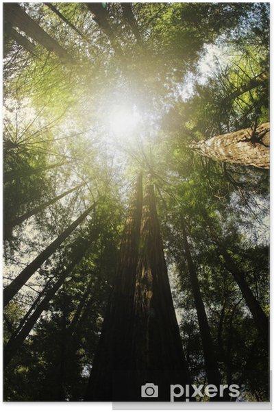 Plakat Redwood las - Ameryka