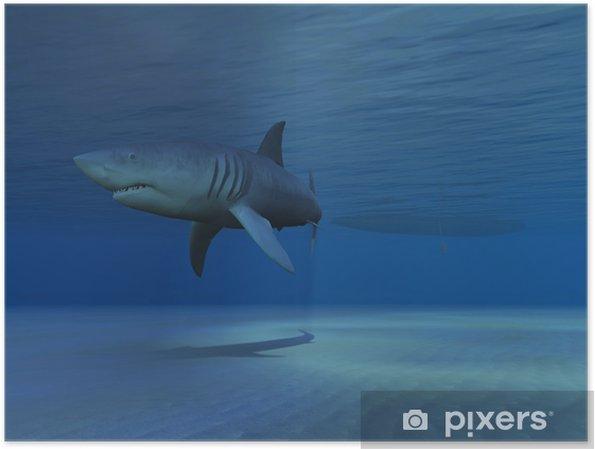 Plakat Rekin - Zwierzęta żyjące pod wodą