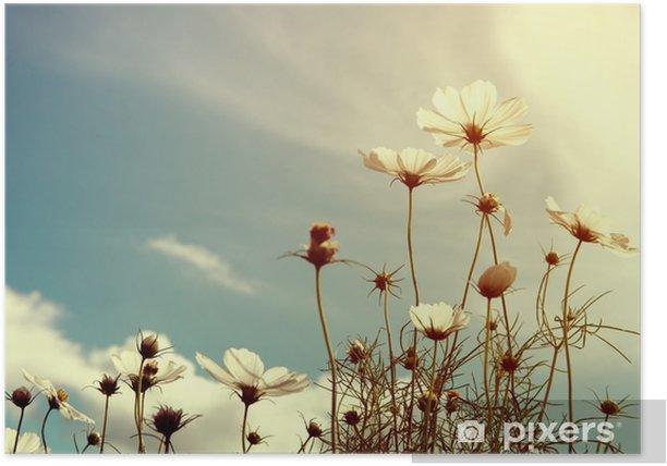 Plakát Ročník kosmos květiny, příroda pozadí - Rostliny a květiny