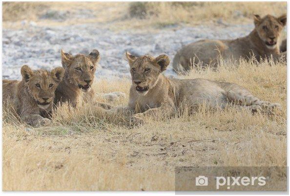 Plakat Rodzina Lwów W Parku Narodowym Etosha