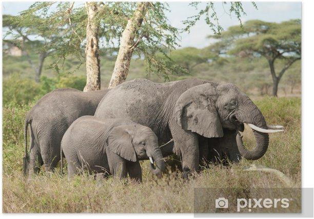 Plakat Rodzina słoń - Cuda natury