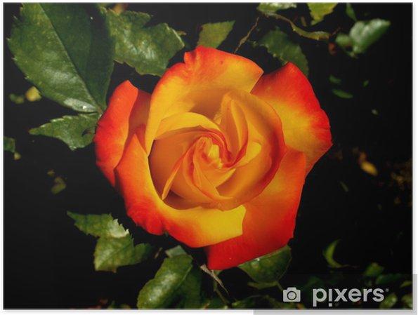 Plakat Ros - Kwiaty