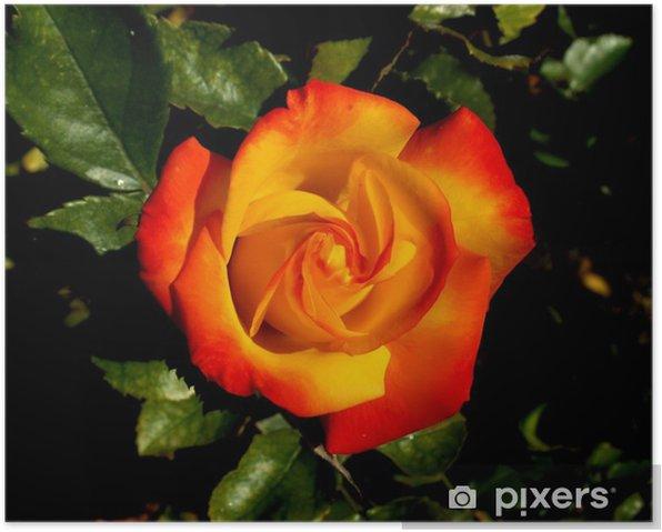 Plakát Ros - Květiny