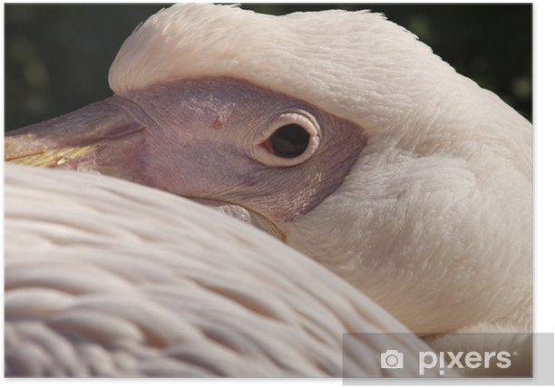 Plakat Rosapelikan - Ptaki